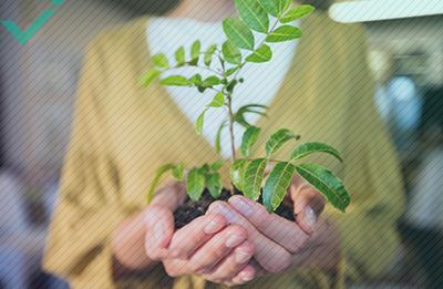 Comercio electrónico y protección del medio ambiente: ¿qué puedes hacer?